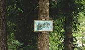 Balisage forêt